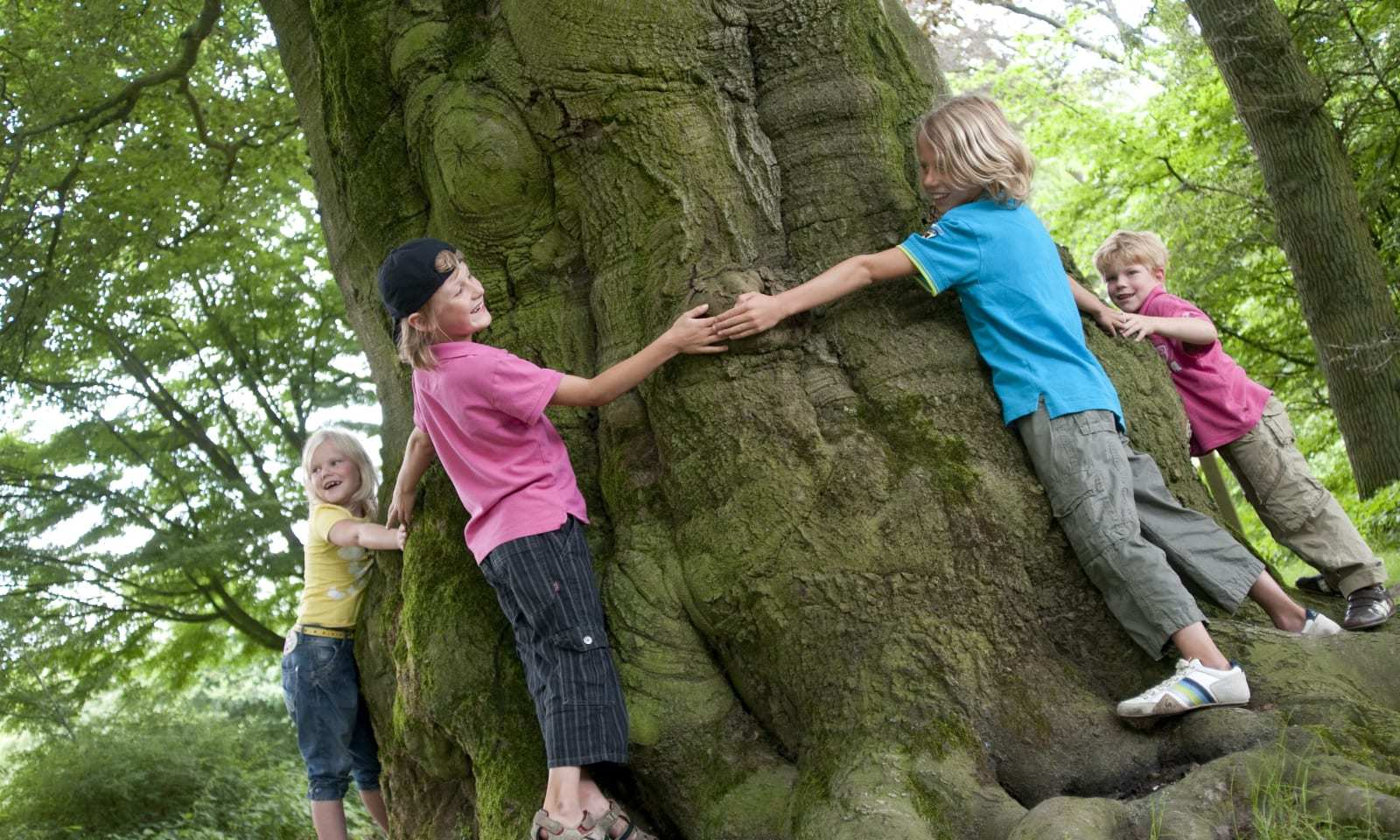 Ontdek het leven van de Bomen in het Bos!